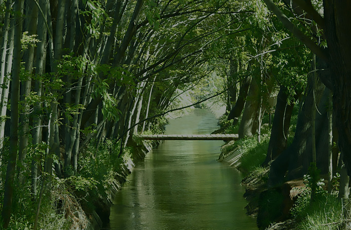 Un puente entre dos mundos