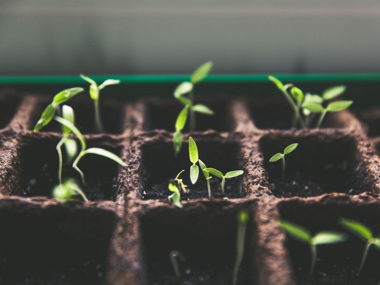 AABDA Curso Introducción al arte de cultivar nuestras semillas biodinámicas