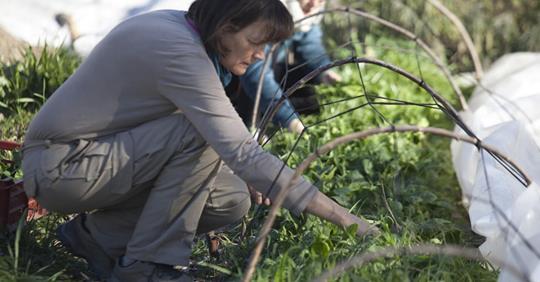 Agricultura Familiar:<br>La contracultura para la alimentación
